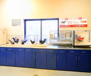 Cashton Middle/High School School Live Animal Classroom